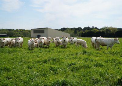 boeuf-fermier-maine-cahier-des-charges